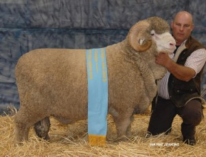 N231 - Champion Fine Medium March Shorn Ram Bendigo 2014