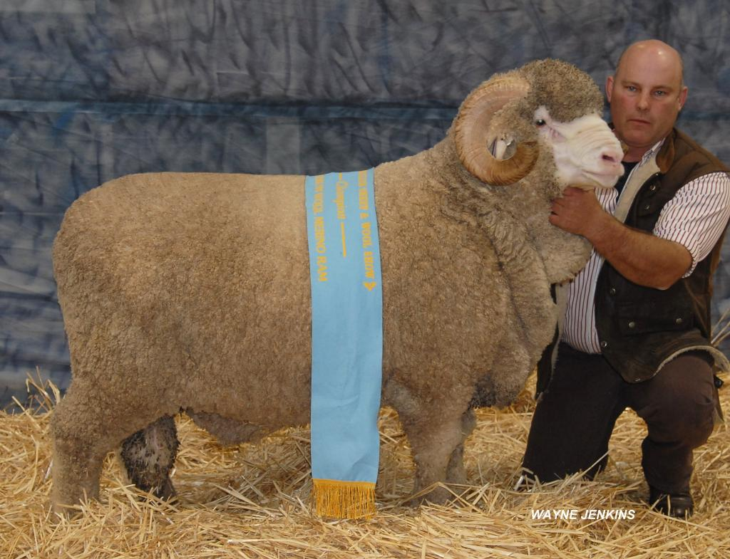 2014 Bendigo Sheep N Wool 217 RET