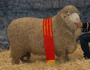 2014 Bendigo Sheep N Wool 219 RET