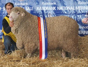 N191 after winning Champion Fine Wool Poll Ram at Dubbo