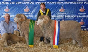 Hamish holding N194 (Reserve) and Jock holding N74 (Champion) Fine Wool March Shorn Rams2013