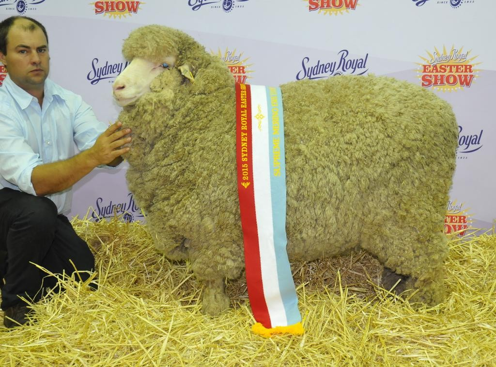 Jock holding Grand Champion Medium Wool Ewe Sydney Royal 2015 (x Langdene 75)