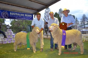 Chris Clonan with the Reserve and Jock McLaren holding N191, the 2014 Ultimate Ram of the NEMFD with sponser Steve Hylands from Bayer Animal Health.