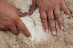 N26's wool January 2014